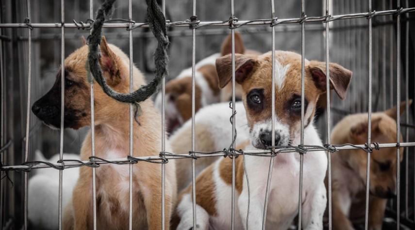 Hukum Jual Beli Anjing dan Kucing
